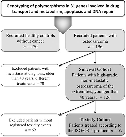 Flow diagram showing all cohorts included in genotyping and association analyses.