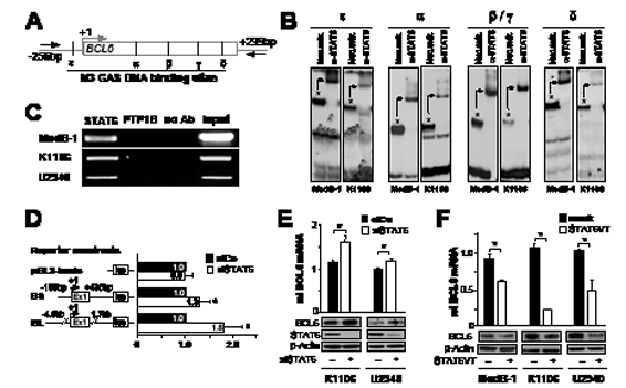 STAT6 represses BCL6 in PMBL.