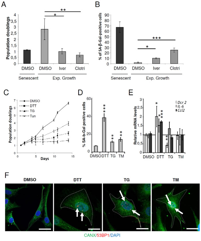 ER stressors accelerated the senescent phenotype in NHDFs.