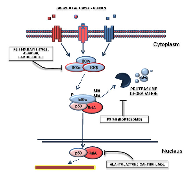 Targeting the NF-κB pathway.