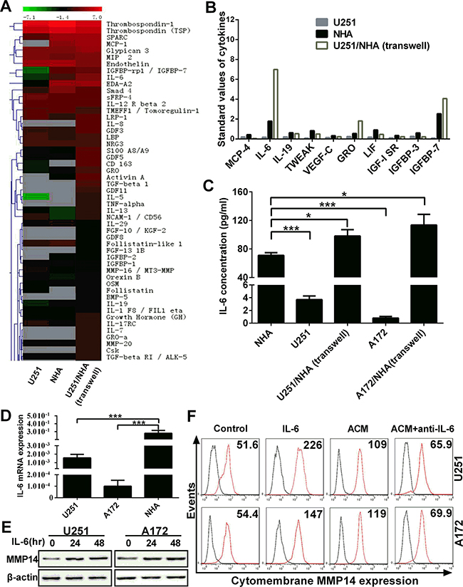 IL-6 secreted by astrocytes induces cytomembrane MMP14 expression on glioma cells.