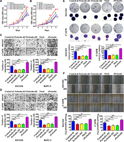 Periostin promotes pancreatic cancer cell proliferation, migration, invasion, and clone formation.