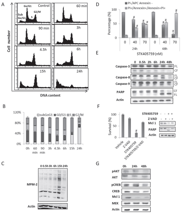 STK405759 inhibits proliferation, induces apoptosis and decreases AKT and CREB protein levels in MM cells.