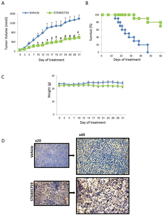 Low-dose STK405759 decreases tumor growth and improves overall survival in a MM xenograft mouse model.