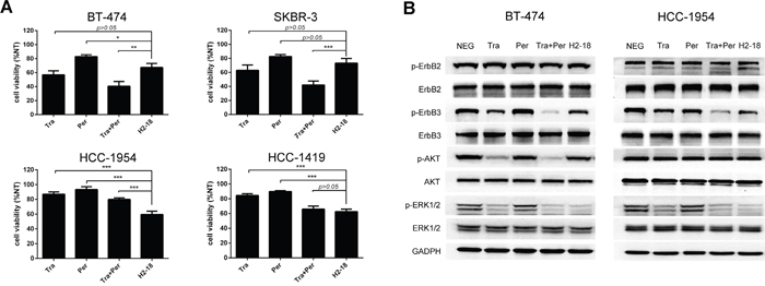 The antiproliferative activity of H2-18 in ErbB2-overexpressing breast cancer cell lines.