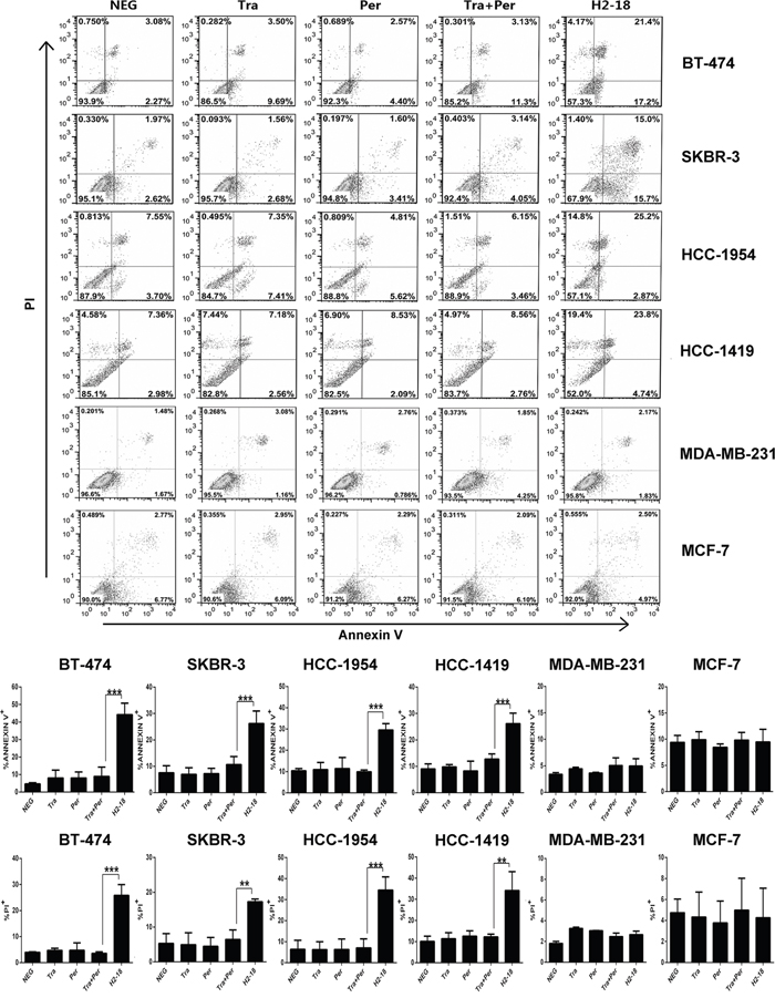 H2-18 potently induces apoptosis in ErbB2-overexpressing breast cancer cell lines.