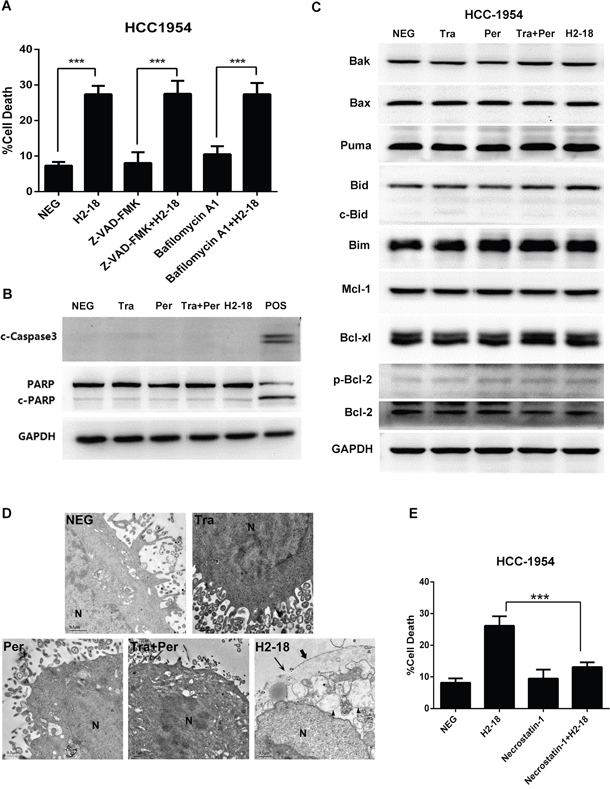 H2-18-induced cell death is RIP1-dependent programmed necrosis.