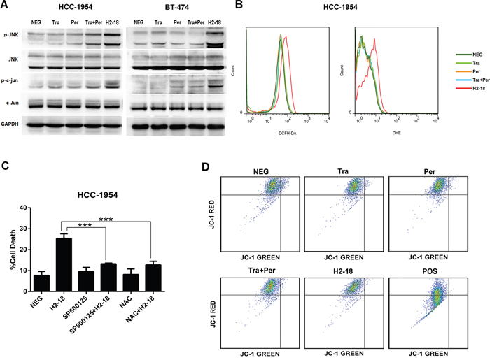 ROS and JNK take part in H2-18-induced programmed cell death.