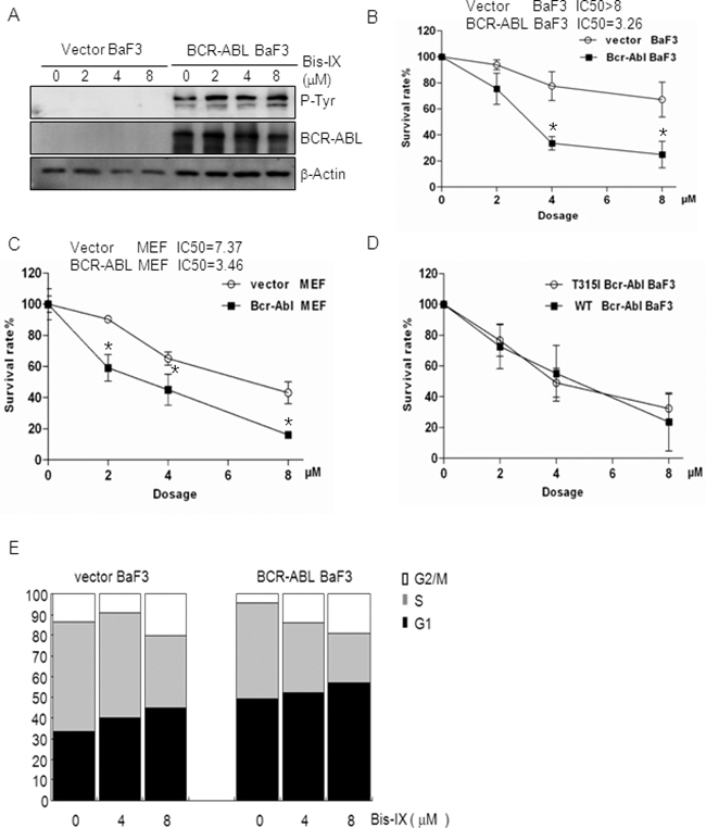 BCR-ABL sensitized cells to Bisindolylmaleimide IX-induced cell death and cell cycle arrest.