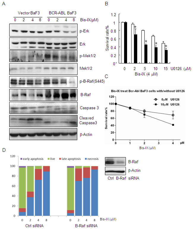 Bisindolylmaleimide IX shows increased cytotoxicity to BCR-ABL positive cells by inhibiting Raf-Erk signaling.