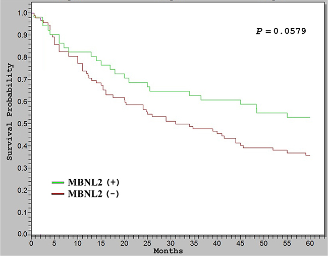 Kaplan–Meier analysis of 5-year overall survival (OS) in 143 patients with HCC.