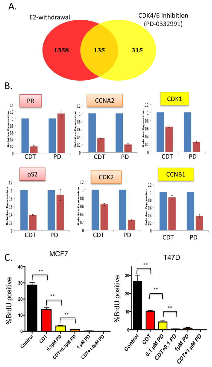 Distinct gene regulation by CDK4/6 inhibition and estrogen withdrawal—cooperation for suppression of cell cycle (