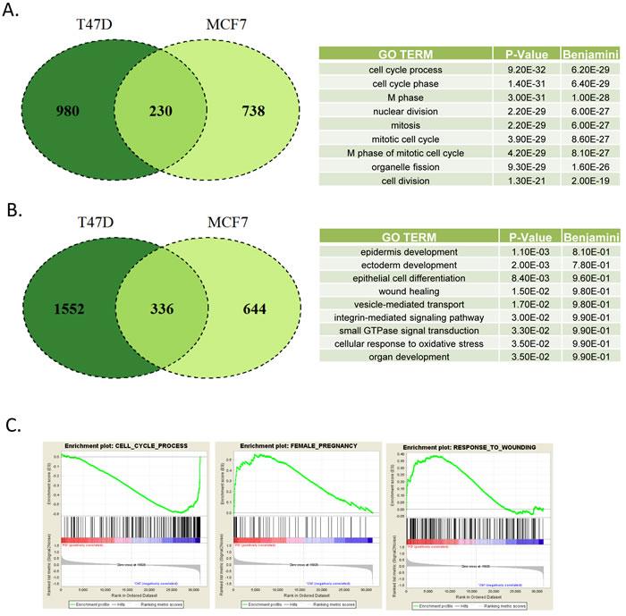Defining CDK4/6 inhibition signature in ER+/Her2- models