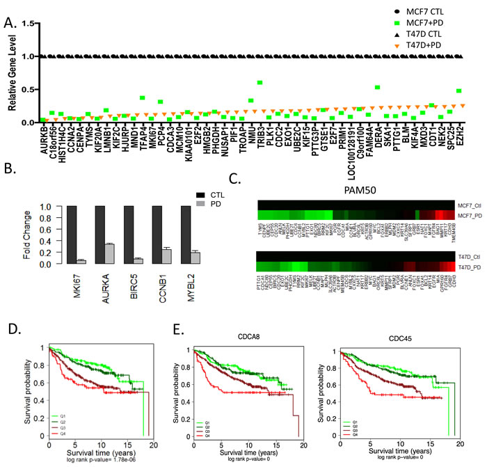 Transcriptional repression by CDK4/6 inhibition and impact on luminal subtypes