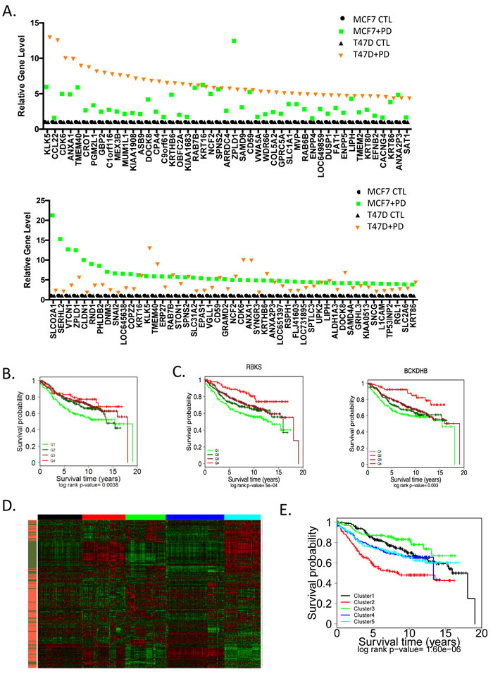 Unexpected impact of genes upregulated through CDK4/6 inhibition on prognosis