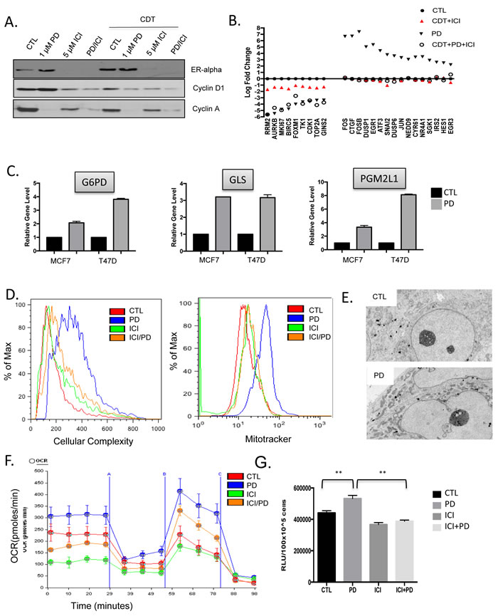 CDK4/6 induction of cellular growth and metabolism are ameliorated by endocrine therapy