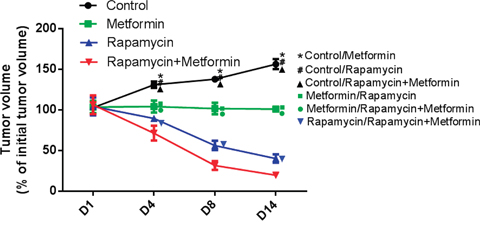 Effects of rapamycin and metformin on tumor growth in vivo.