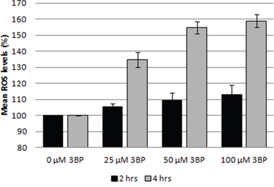 Influence of 3BP (at concentrations of 25 μM, 50 μM and 100 μM) on the generation of ROS in MM cells after 2 and 4 hrs incubation.