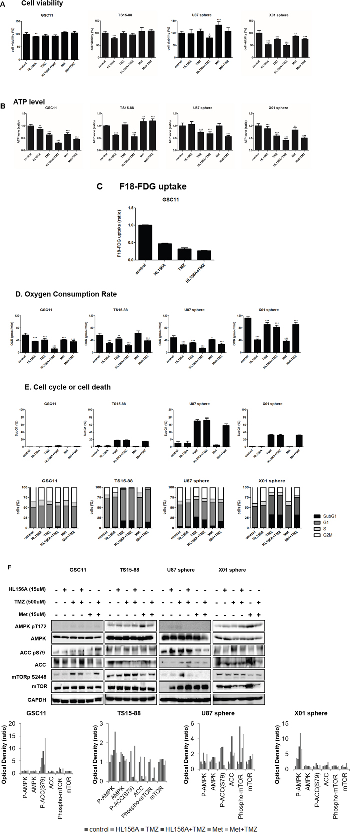 Effects of HL156A, TMZ, and combination treatment on cell viability.