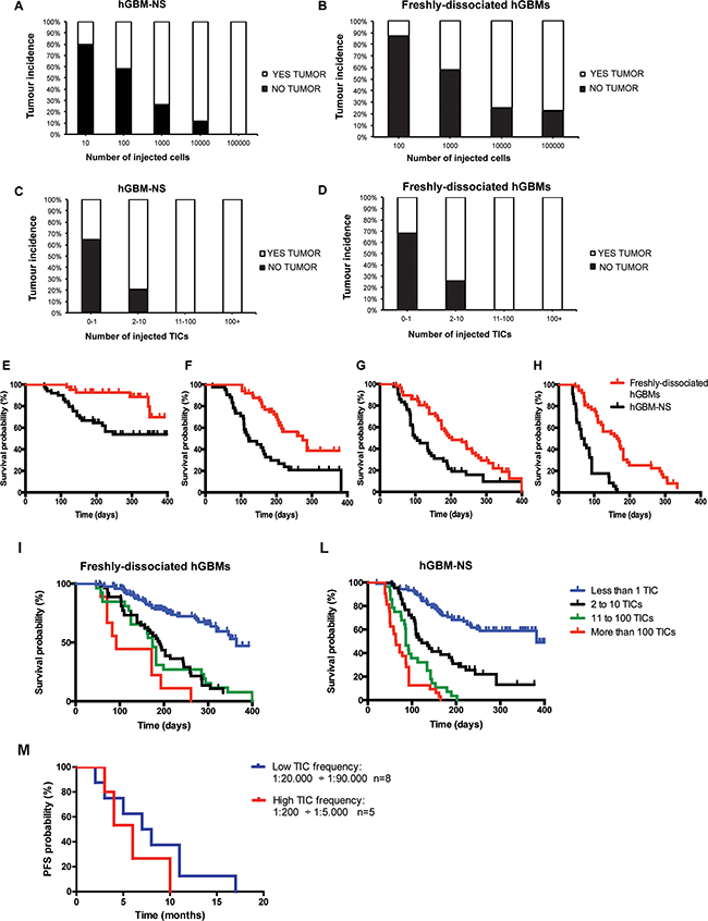 Tumor incidences and survival of mice intracerebrally injected with freshly-dissociated hGBM cells and cells from hGBM-NS.