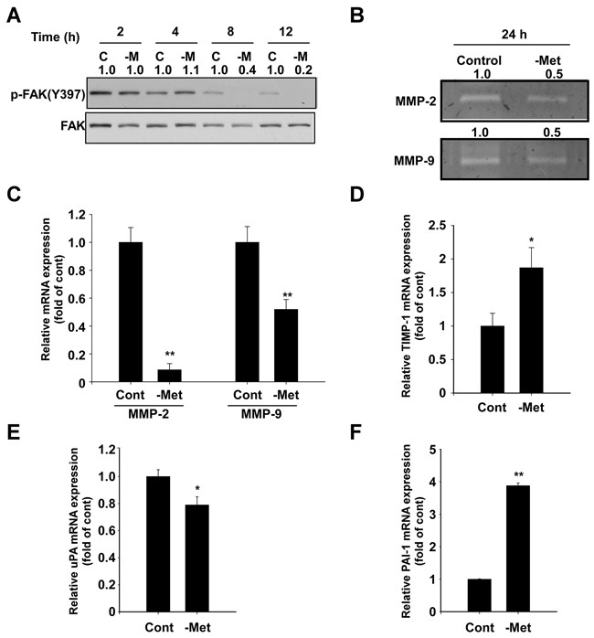Effect of methionine deprivation on FAK, MMP-2, MMP-9, TIMP-1, uPA, and PAI-1 expression in MDA-MB-231 cells.