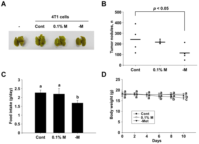 Inhibitory effect of a methionine deprived-diet on lung metastasis in BALB/c mice.