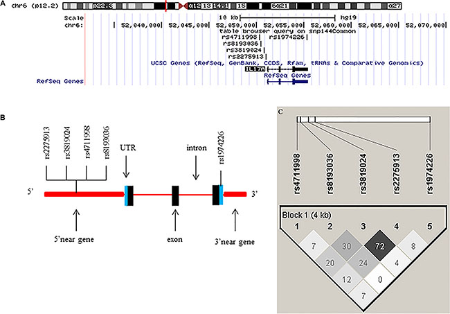 Chromosome and gene maps and locations of the potentially functional polymorphisms in the