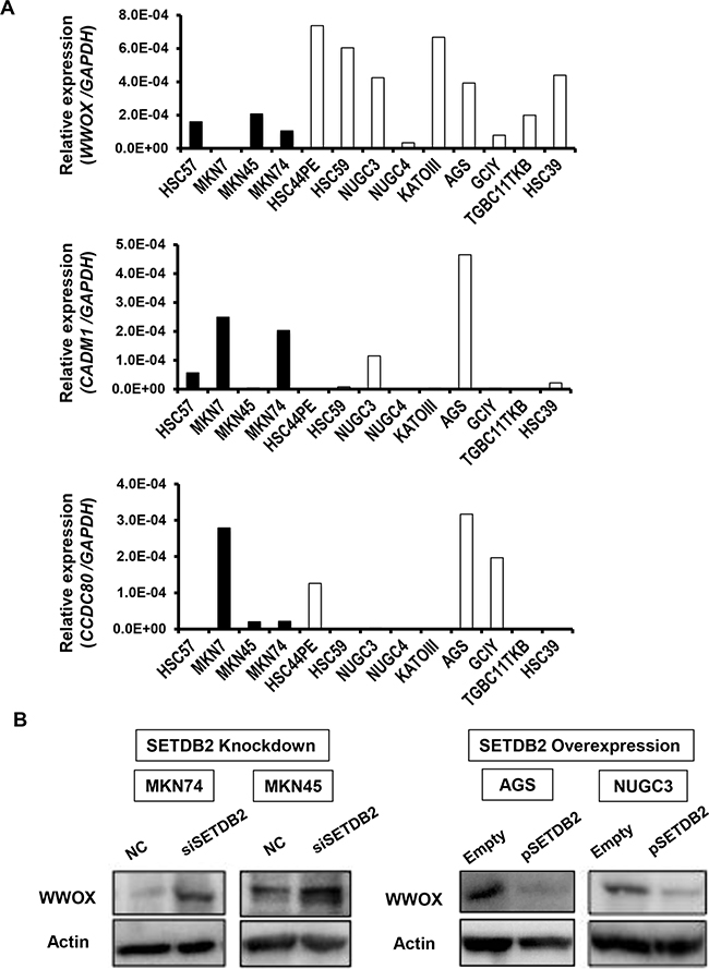 The relationship between SETDB2 and target gene expression in GC cell lines.