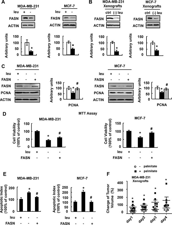 FASN mediates the effect of leucine deprivation on breast cancer cells.