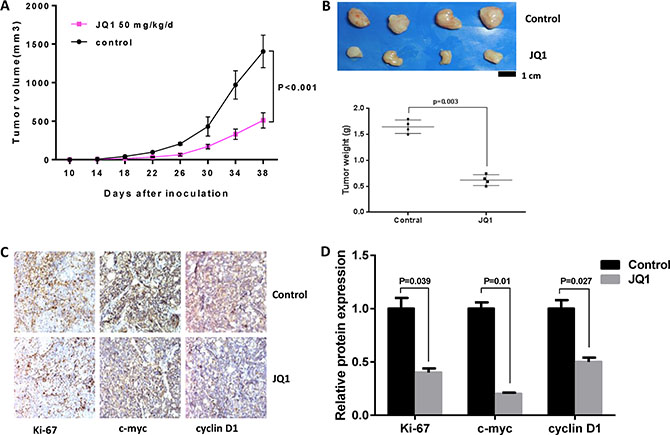 JQ1 suppressed tumor growth in Hec-1a xenografts in nude mice.