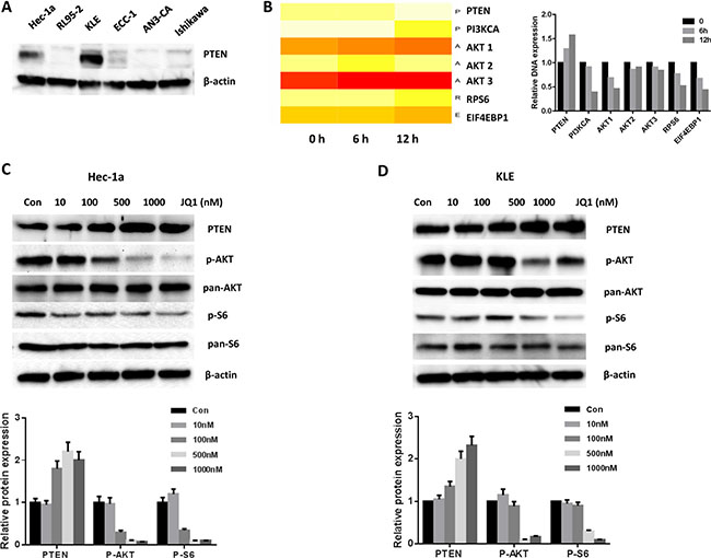 JQ1 increased the expression of PTEN and blocked the PI3K/AKT/S6 pathway.