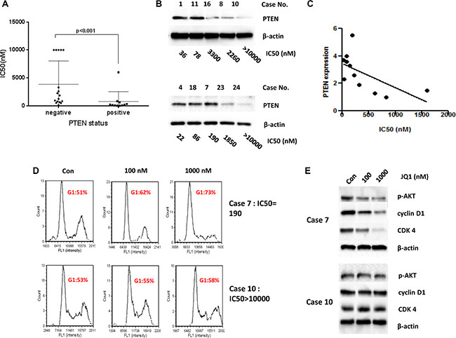 PTEN status related to the sensitivity to JQ1 in the primary cultures of endometrial cancer.