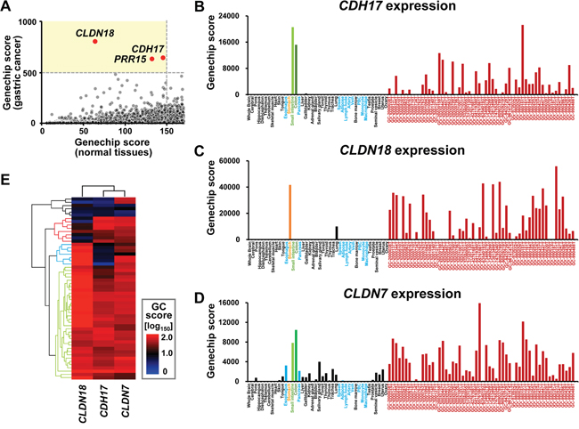 Gene expression pattern in systemic organs and human gastric cancer.