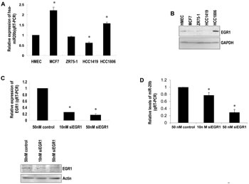 EGR1 correlates with miR-20b expression levels.