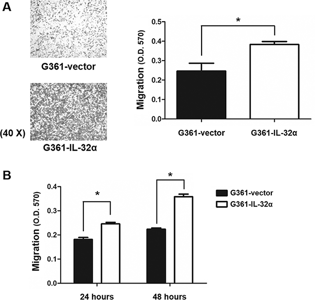 IL-32α overexpression in human melanoma cell lines enhances cell migration.