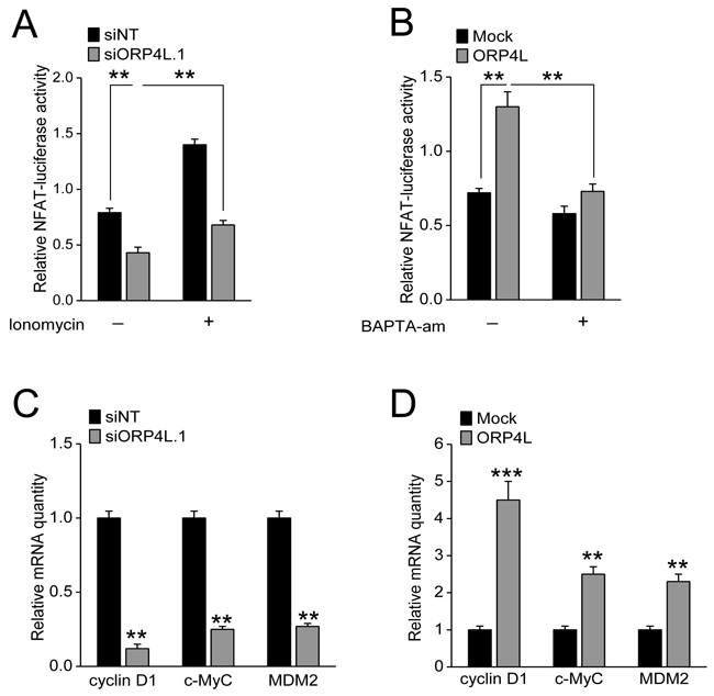 ORP4L increases Ca2+-dependent NFAT activity and promotes expression of a gene cluster which supports cell proliferation.