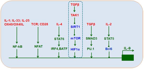 Transcriptional control of T
