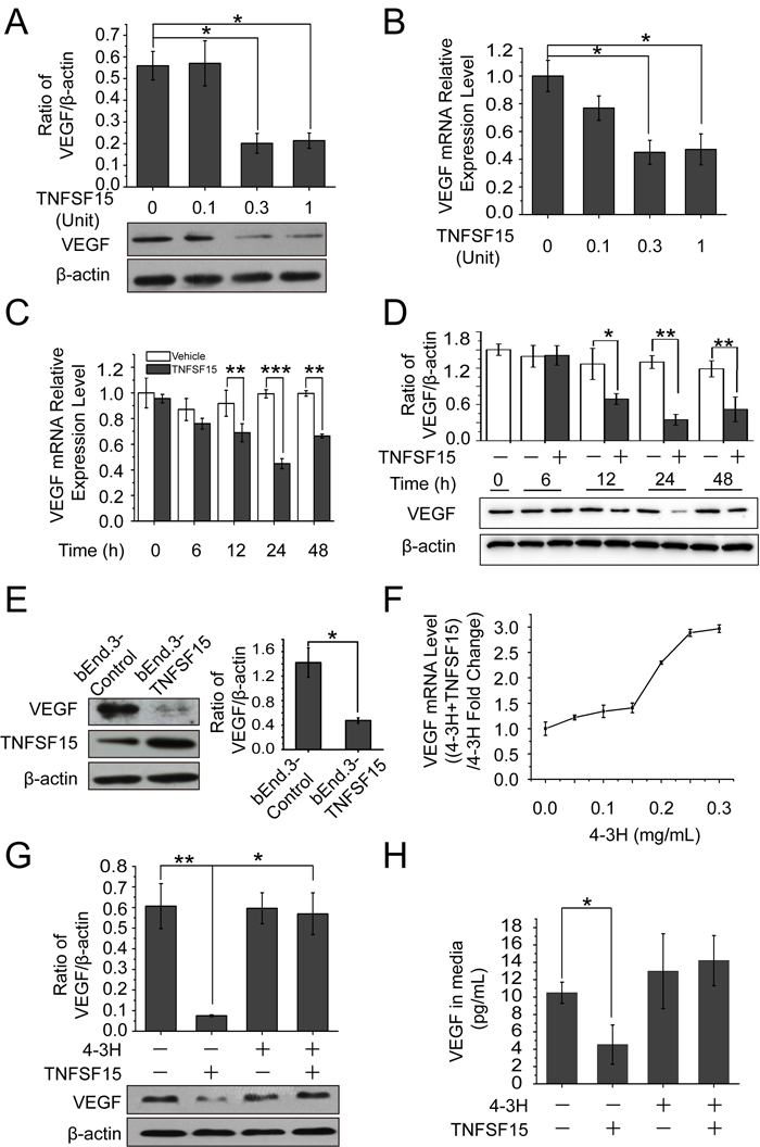 TNFSF15 down-regulates VEGF expression in bEnd.3 cells.