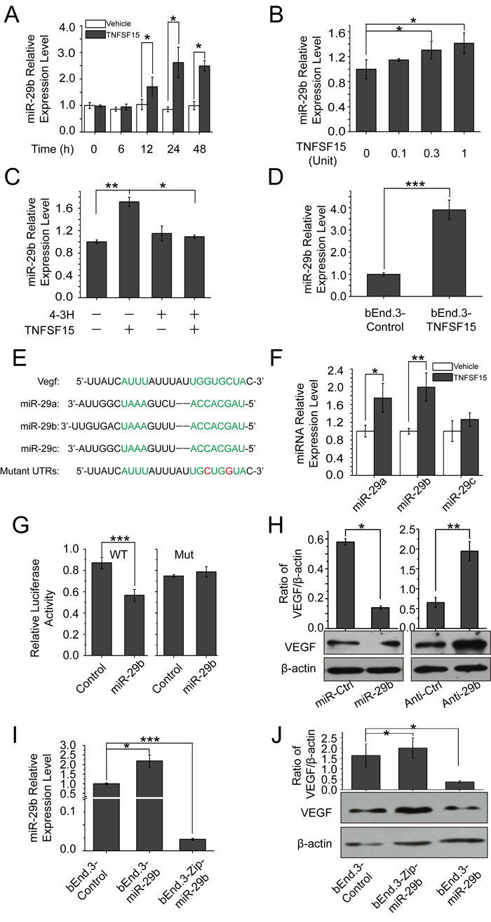 TNFSF15 up-regulates VEGF-targeting miR-29b in bEnd.3 cells.