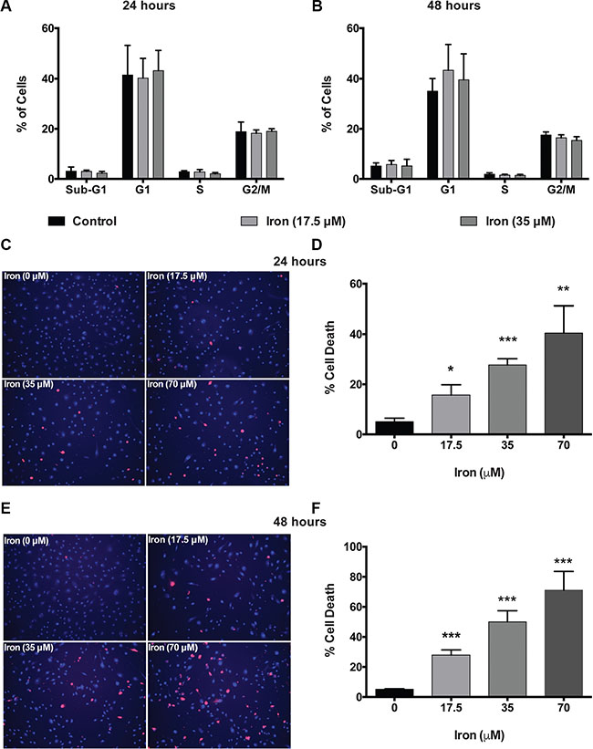 Cell-permeable iron induces cell death in VEGF-A stimulated endothelial cells.