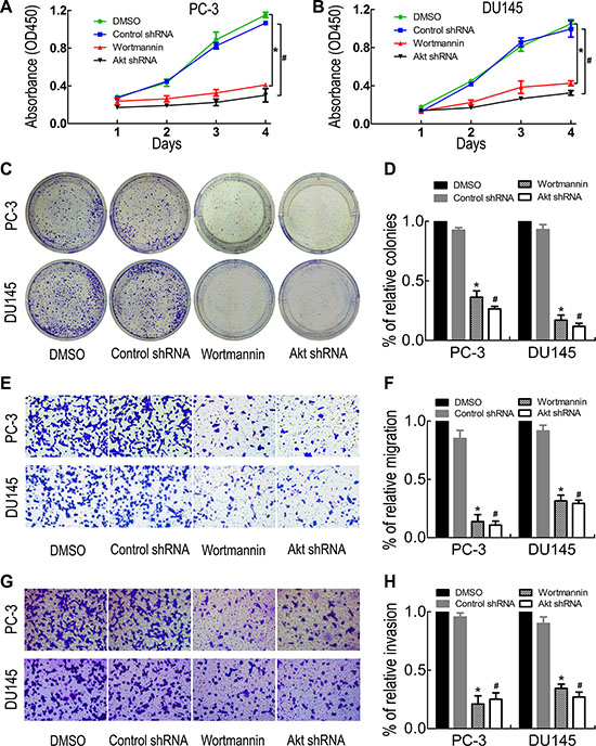 PI3K inhibition reduced PC-3 and DU145 cell proliferation, migration and invasion.