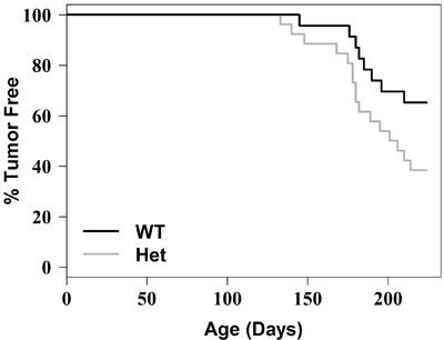 Tumor free survival curve.