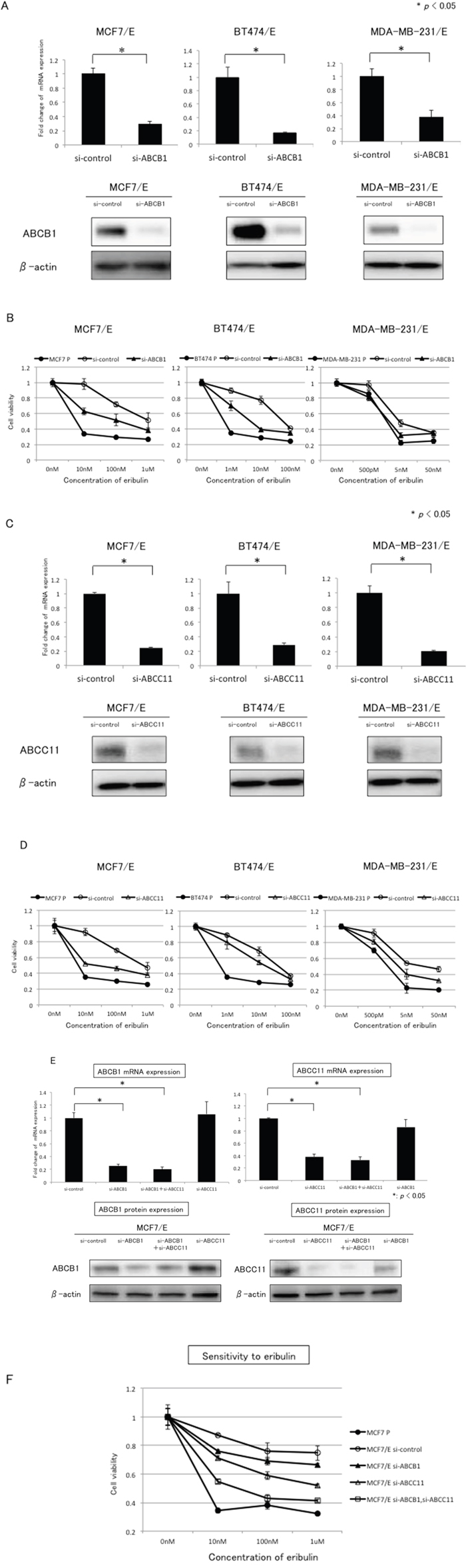Effects of ABCB1 or ABCC11 knockdown in eribulin-resistant breast cancer cells.