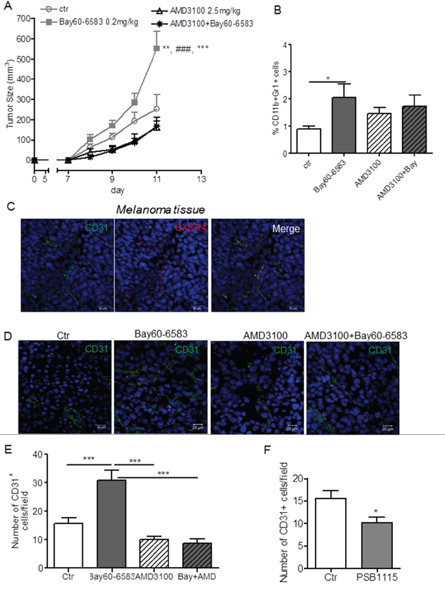 Inhibition of CXCR4 with AMD3100 prevents the pro-angiogenic effects of Bay60-6583.