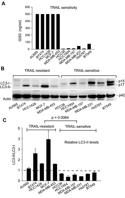 TRAIL resistance correlates with the expression of autophagosome marker LC3-II in breast cancer cell lines.