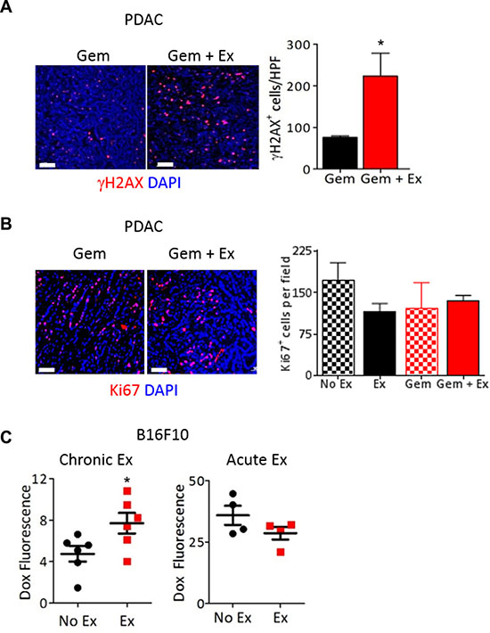 Exercise increases delivery of chemotherapy to the tumor.