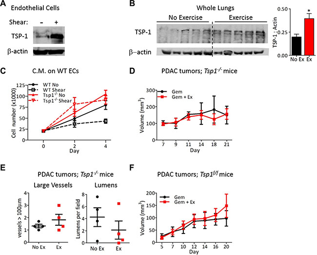 Endothelial-derived TSP-1 is critical for increased chemotherapeutic efficacy by shear stress.