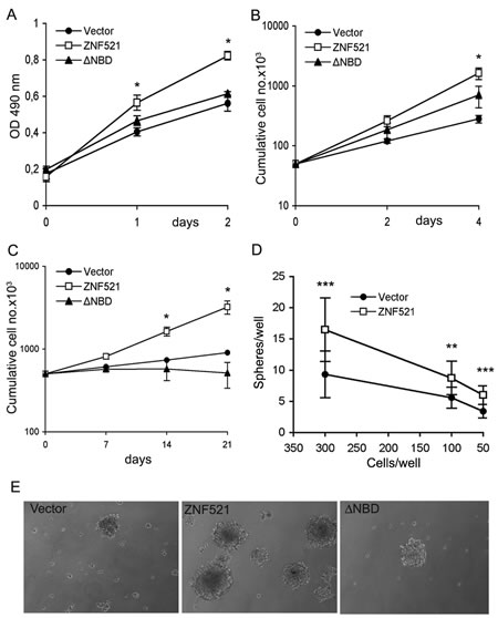 Enforced expression of ZNF521 confers growth advantage on DAOY cells.