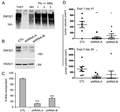 Silencing of Zfp521 impairs growth and tumorigenicity of Ptc