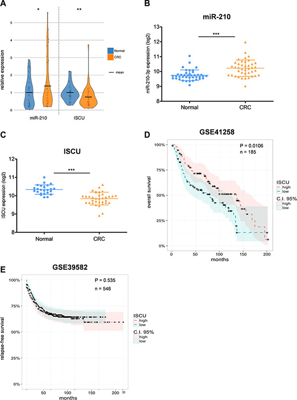 miR-210 and ISCU expression are clinically relevant for CRC patients.